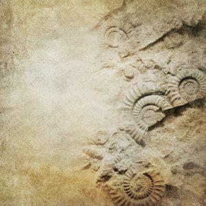 ammonite crédence douche Mural Decor